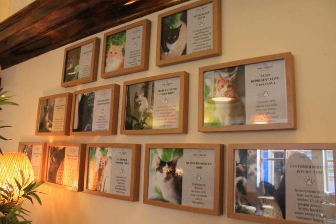 You&Meow Cat Cafe in Bristol