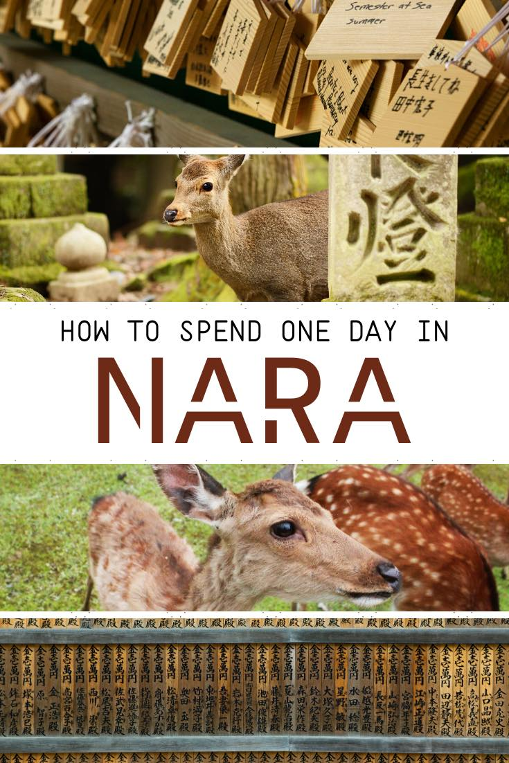 Nara in one day Itinerary