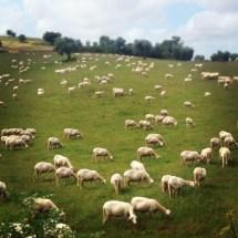 sembrava la Nuova Zelanda ma il pastore maremmano che dopo pochi secondi mi è venuto abbaiando contro mi ha ricordato che ero in Maremma