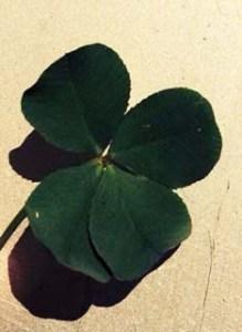 Four-leaf clover for luck