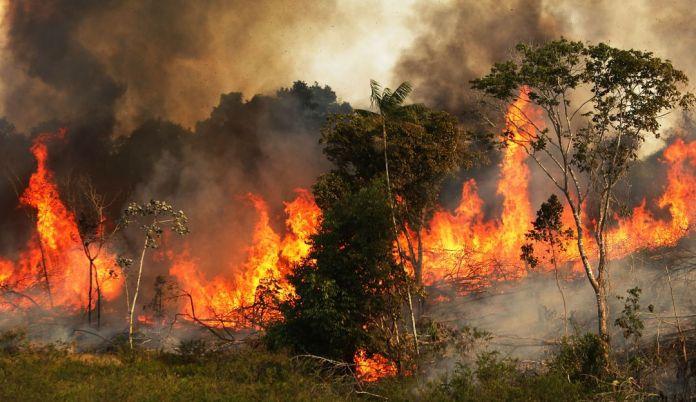 Resultado de imagen para Fotos del incendio de la amazonía