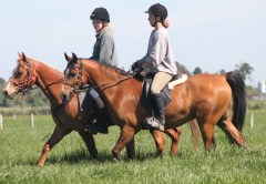 Kass on his second day out down the farm under saddle, November 13, 2013.
