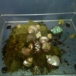 Hermit crabs enjoying some moss while their tank is being cleaned!