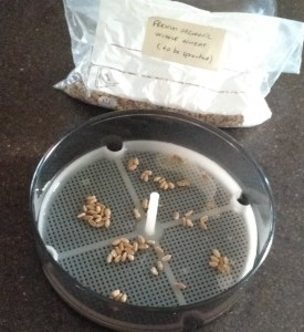 Mini dome sprouter - dip seeds in water to moisten