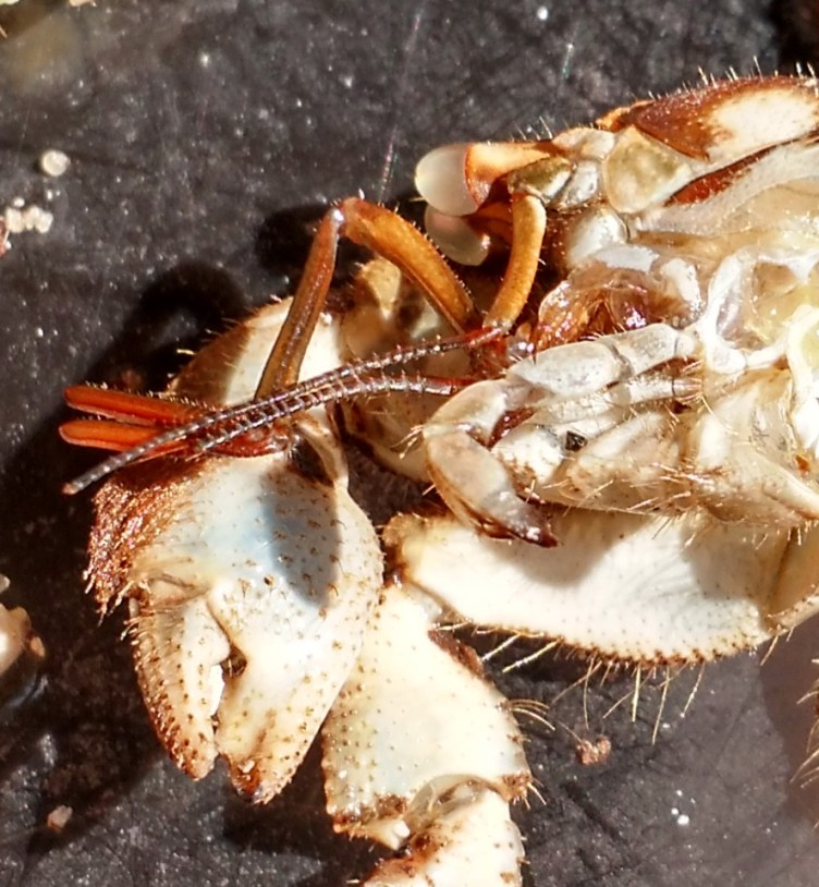 Category: Biology | The Crabstreet Journal