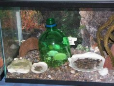 ISO bottle should be pushed all the way to the bottom of your substrate so there is no way for another crab to burrow in from below.