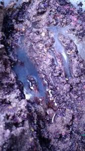 flooded substrate