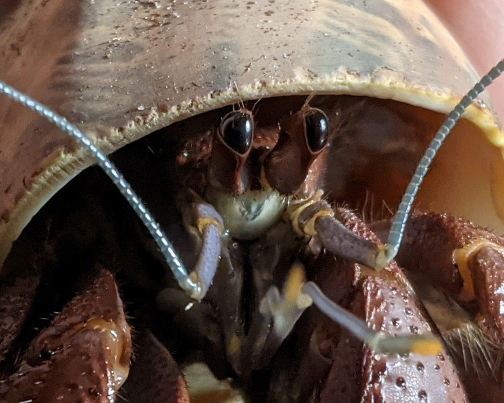 Hermit Crab Care 101