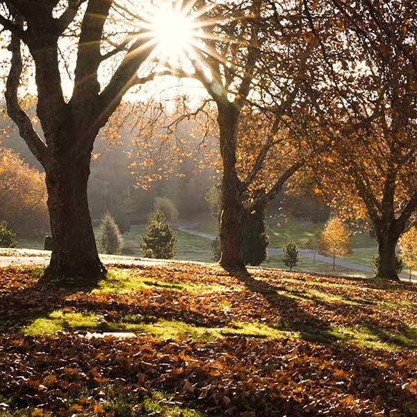 Royal Oak – Beautiful