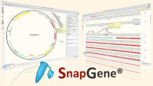 Snapgene5.2.5.1 Crack+[Torrent 2021]Registration Code For Mac & Win