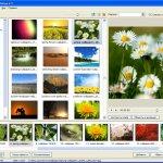 PicturesToExe Deluxe 9.0.18 + patch