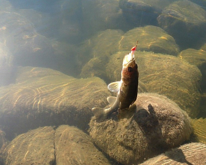 Fishing Around Calgary, Pine Coulee Reservoir
