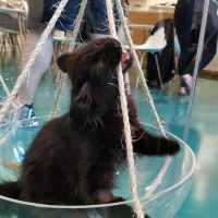 Your Guide to Regal Cat Cafe in Calgary