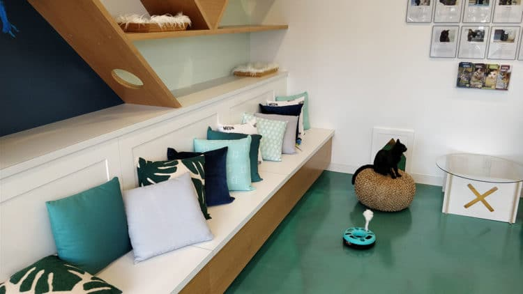 Regal Cat Cafe inside