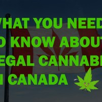 What you need to know about legal cannabis in Canada