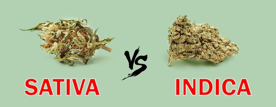 Indica and Sativa