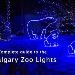 Complete Guide to the Calgary Zoo Lights
