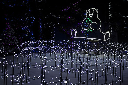 Calgary Zoo Lights Bear Fish