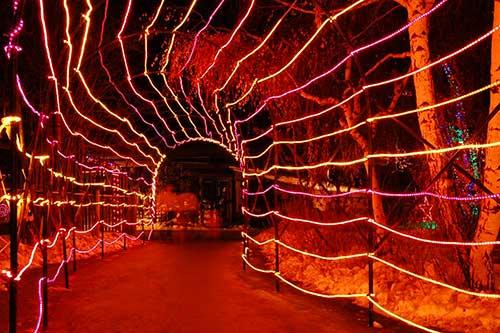 Calgary Zoo Lights Tunnel of Love