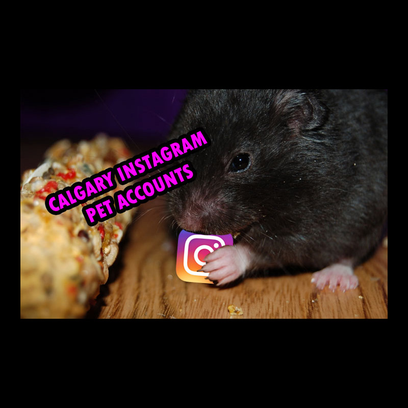 Calgary pet Instagram accounts