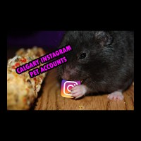 Calgary Instagram Pet Accounts. Dogs, Cats, and cuteness!