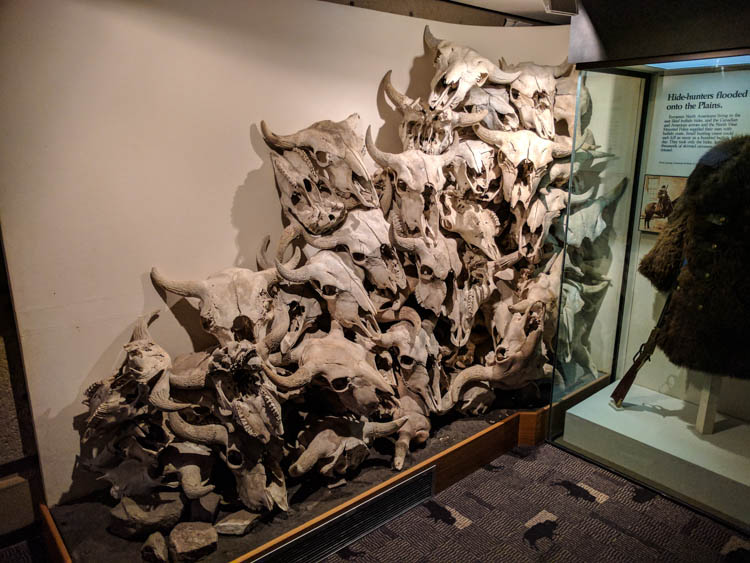Head-Smashed-In Buffalo Jump Skull Pile