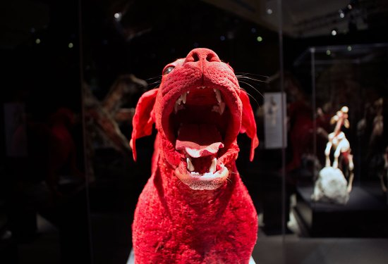 TELUS Spark: BODY WORLDS Animal Inside Out – Guide (2019)