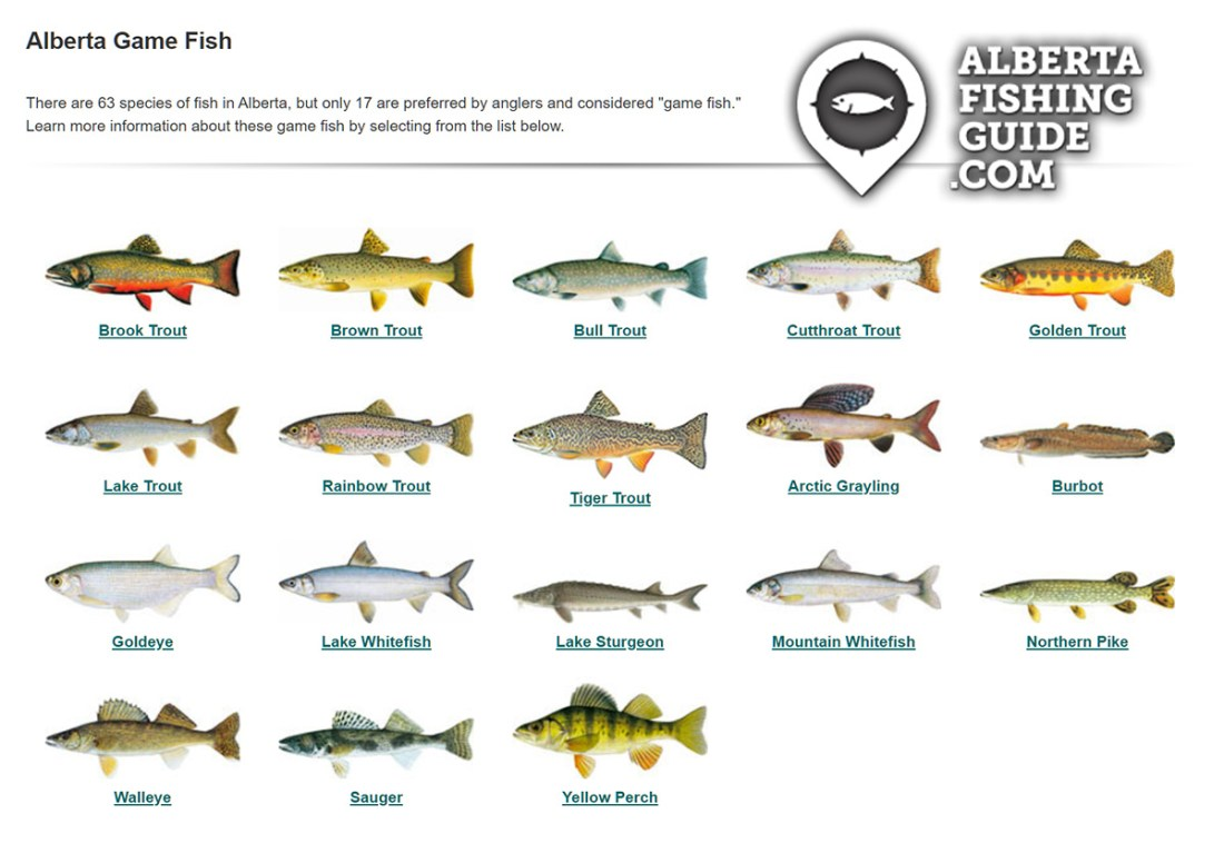 Comprehensive Guide - Getting Started With Fishing In Alberta Screenshot of http://www.albertafishingguide.com/fish