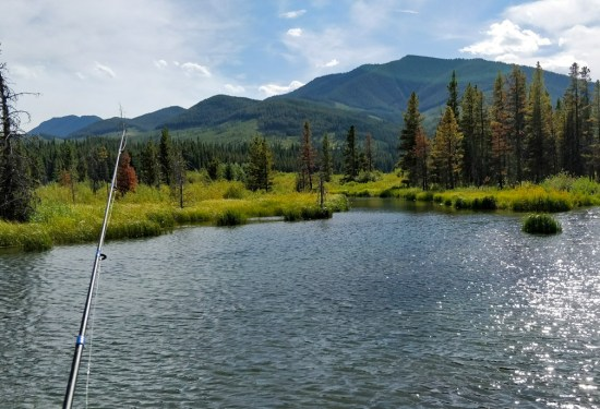 Comprehensive Guide – Getting Started With Fishing In Alberta