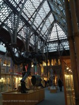 Inside the Natural History Museum during the day. That is a T-Rex. He is still large even when I'm now adult size.