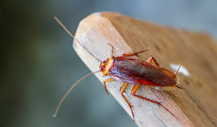 4 Reasons to Hate Cockroaches a Little Less - Craffic