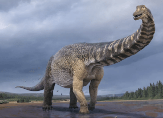 Australotitan Cooperensis aka Cooper is the largest dinosaur ever discovered