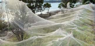 Spider Rain in Australia ended up with a creepy but beautiful web blanket covering the whole landscape