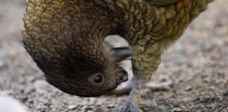 parrot self care