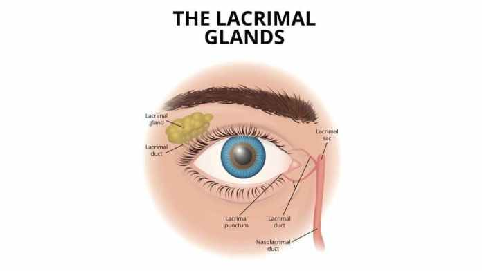 The Lacrimal Glands in Human Eye