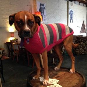 Moon-Dog---Tessdog