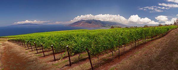 Maui Winery