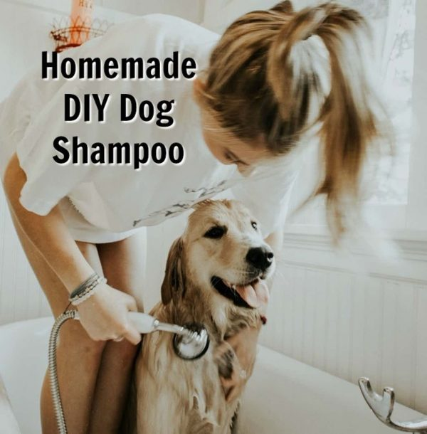 DIY Dog Shampoo for sensitive skin