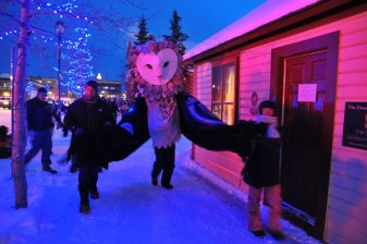 Owl Walking