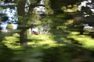 horses hiding