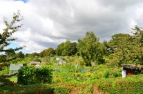 The Allotment Gardens