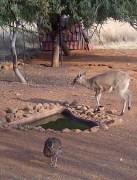Bloemfontein-20140618-00725 (485x640)