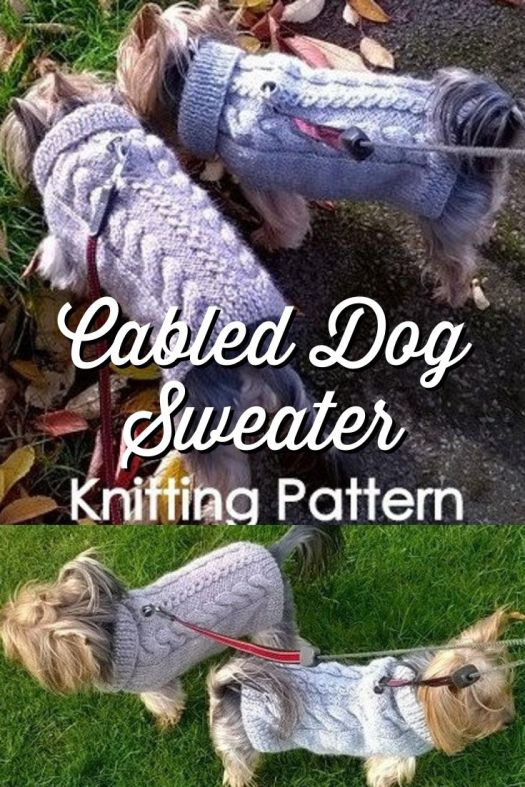 Sweet little cabled dog sweater, perfect little pattern to make for fall! Keep your little dogs warm and cozy this season! #knittingpattern #knitdogsweater #dogsweaterpattern #knitting #yarn #crafts #doglovers #craftevangelist