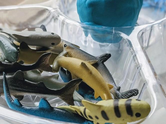 awesome shark play dough sensory activity