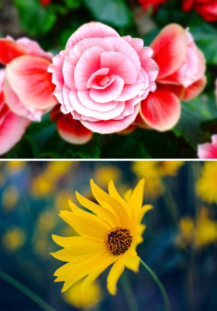 flores-portada
