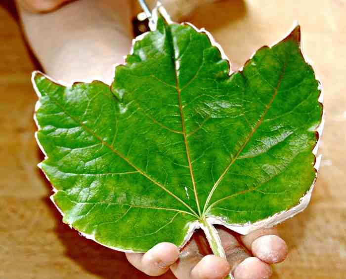 Use leaves you have collected to make these beautiful little air dried clay leaves. Great, simple, fun craft for both kids and adults