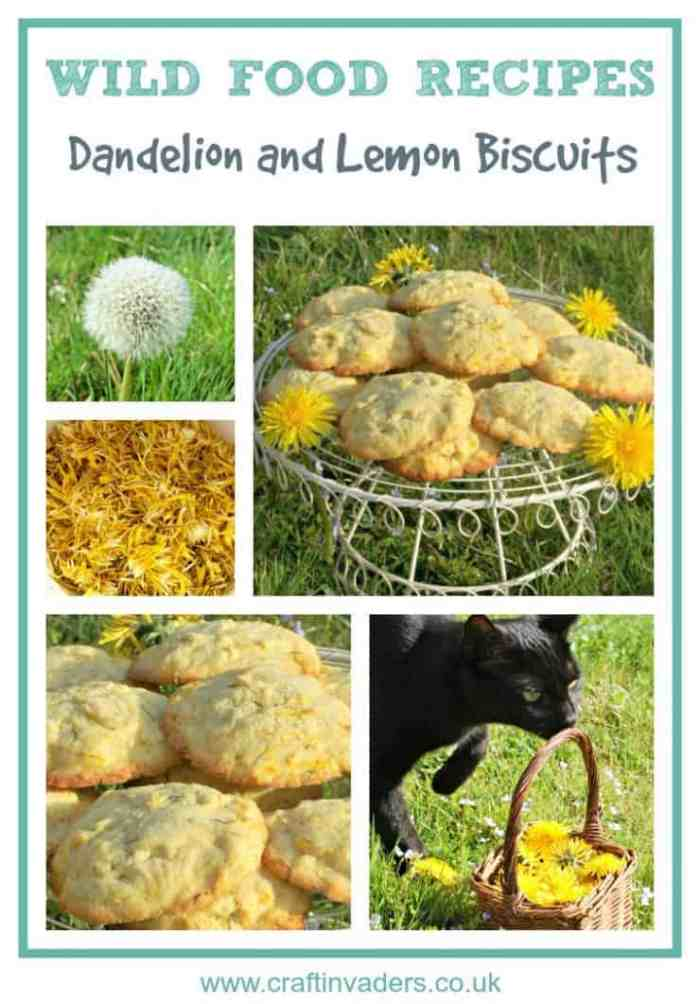 Dandelions are one of the easiest wild flowers to identify, so are a perfect place to start if you want to cook with wild food. Get out and forage some today and try our wonderful Dandelion and Lemon Biscuit recipe.