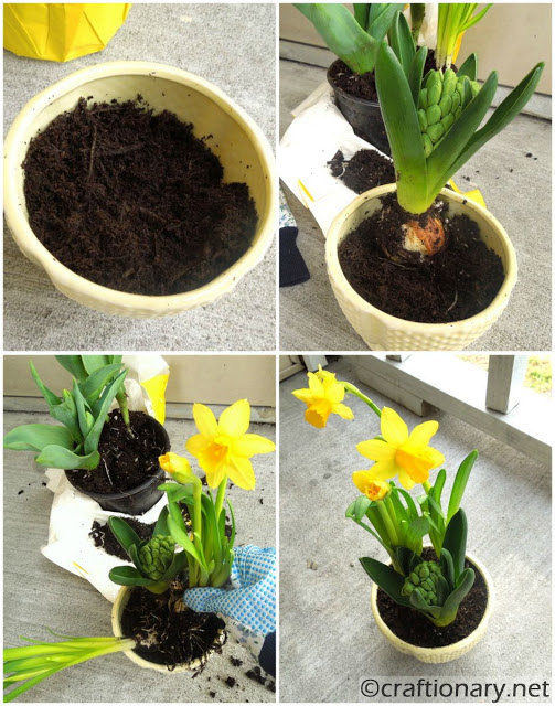 easy flower pot mothers day gift idea daffodils yellow is for friendship