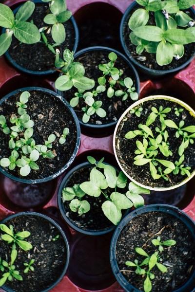 close up of plants pots