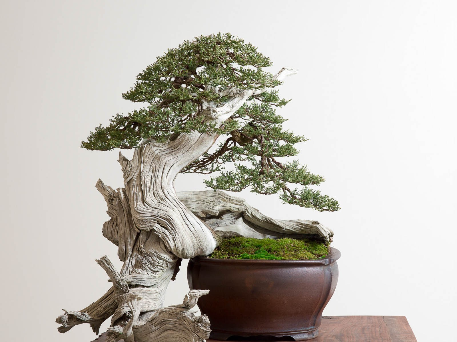 The Bonsai Kid | Craftsmanship Magazine, Fall 2015